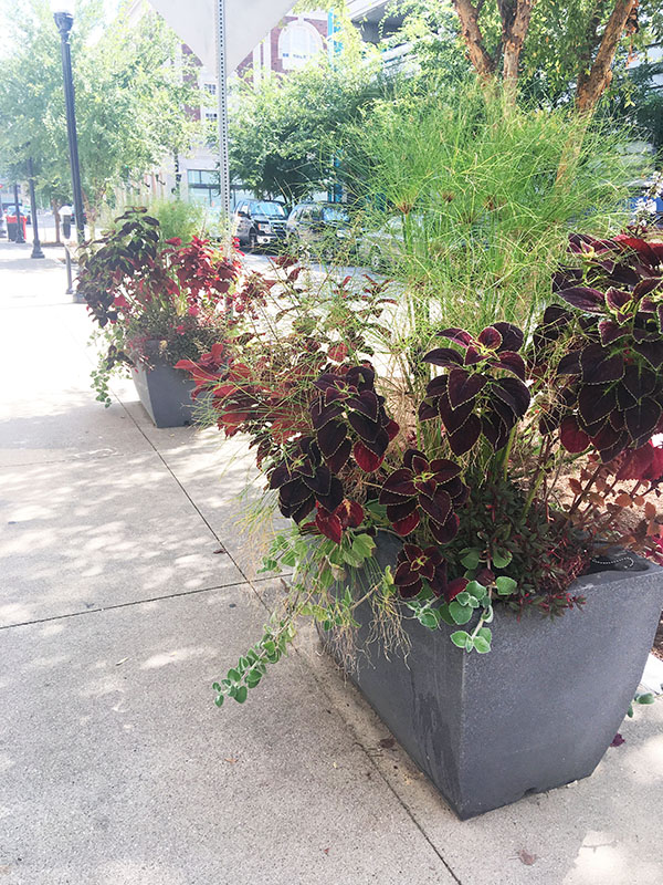 Extra Large City Planters Downtown Louisville Kentucky EarthPlanter
